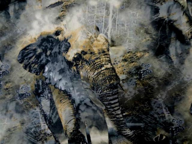 Popeline coton lycra grise elephants 1